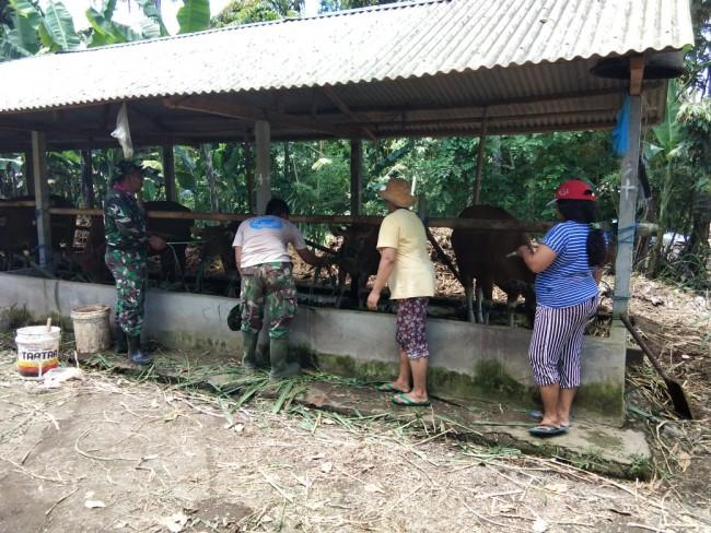 Memotivasi Peternak Sapi, Anggota Satgas TMMD Menyempatkan Melihat Ternak Milik Petani