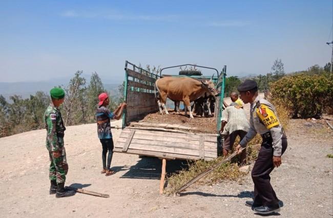 Gagalkan Penyelundupan Hewan Ternak, Dansatgas : Ini Wujud Kedekatan TNI dengan Masyarakat