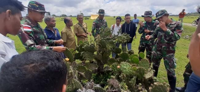 Satgas Yonif R 142/KJ Berikan Pengetahuan Tentang Kaktus Kepada Pelajar dan Perangkat Desa Maudemo