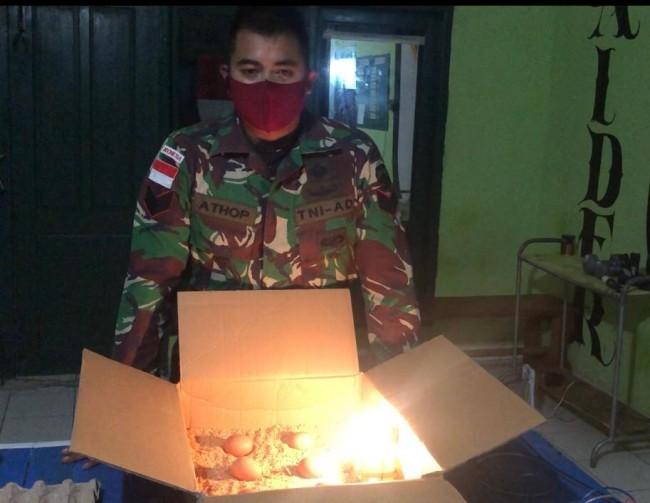 TNI di Perbatasan Buat Alat Penetas Telur Ayam Dengan Cara Yang Mudah dan Murah