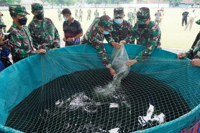 Wujudkan Ketahanan Pangan, Korem 163/Wira Satya Budidayakan Lele dan Hidroponik
