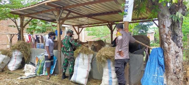 Duet Babinsa dan Babinkamtibmas Berikan Semangat Peternak di Wilayah Binaan